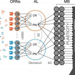 独ケルン大学による昆虫の効率的な記憶システムをAIモデルに応用する研究を紹介!