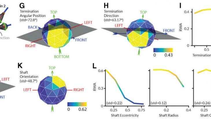 脳とAIに共通する「物体の見方」があること明らかにした研究を紹介!